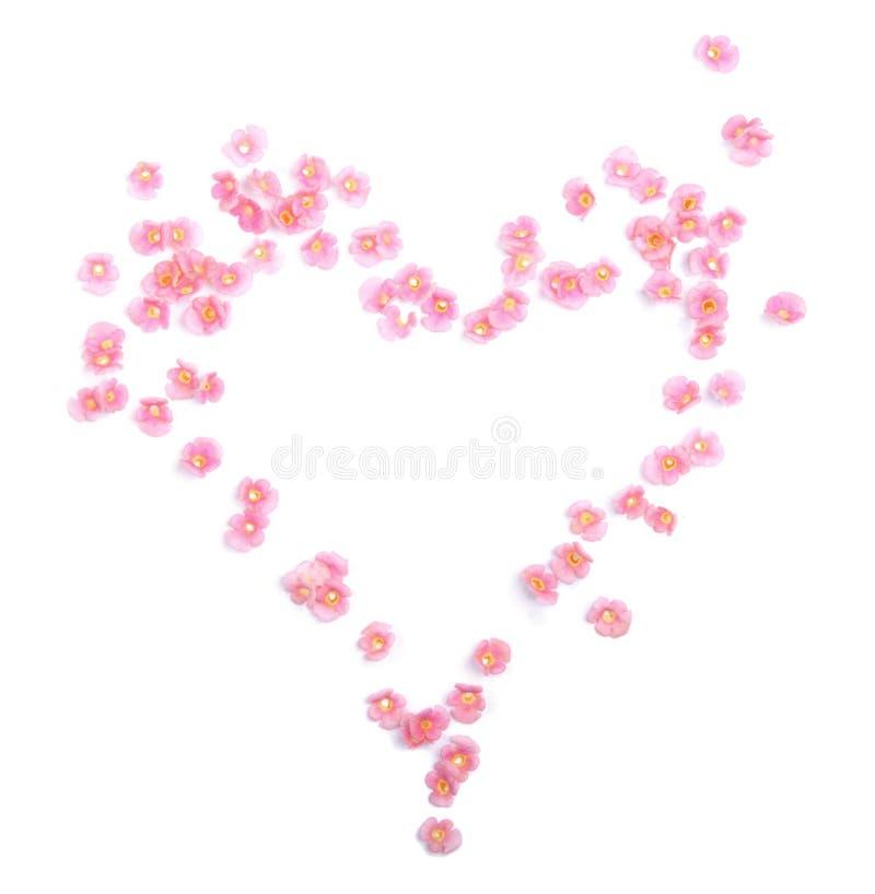 цветет сердце стоковое фото