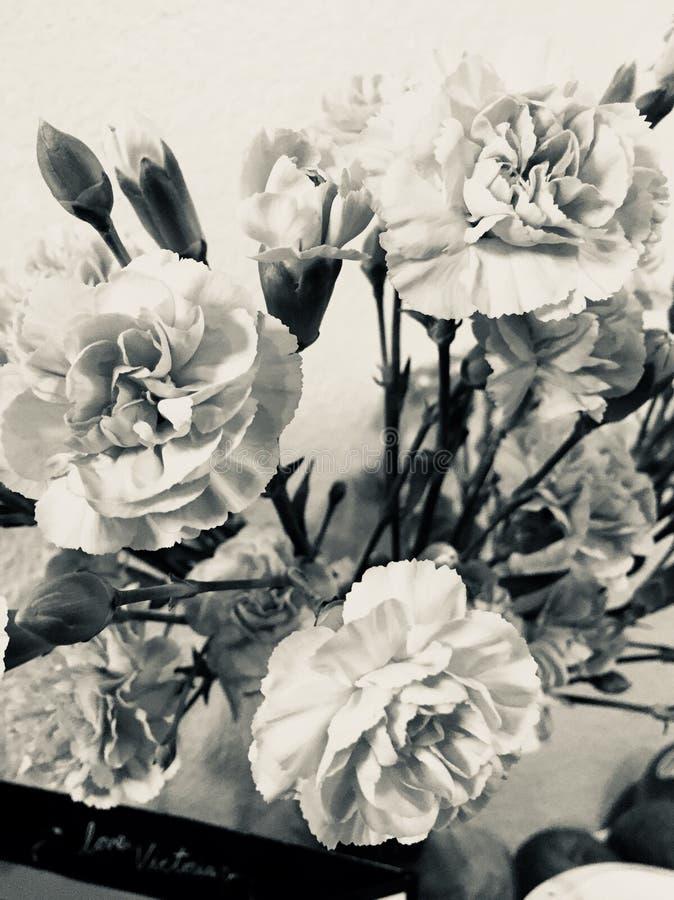 цветет серый цвет стоковое изображение
