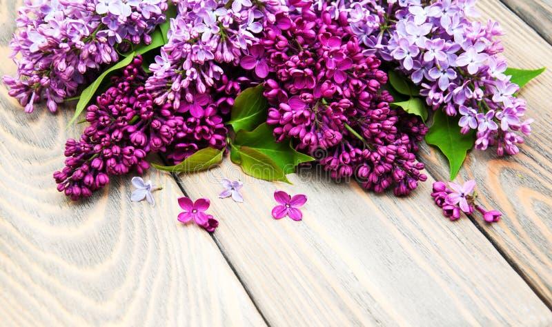 цветет сирень стоковая фотография
