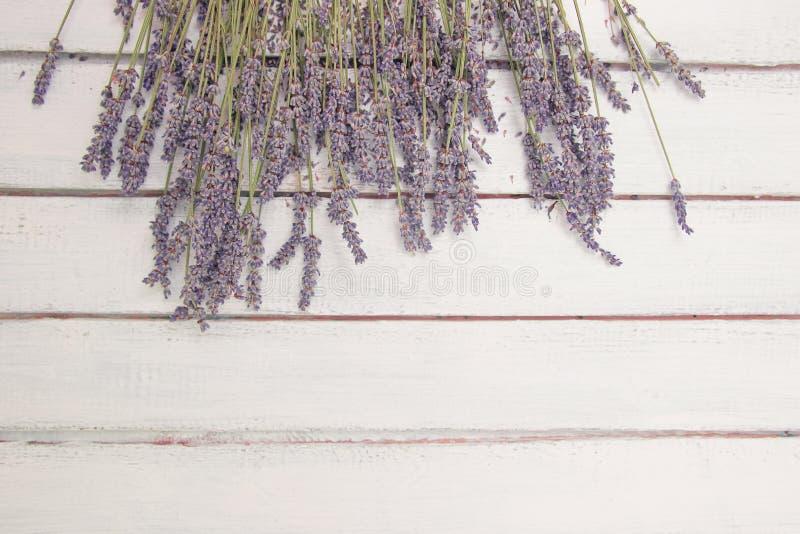 Цветет состав Рамка сделала из свежих цветков лаванды на белой предпосылке Лаванда, флористическая предпосылка Плоское положение стоковые изображения