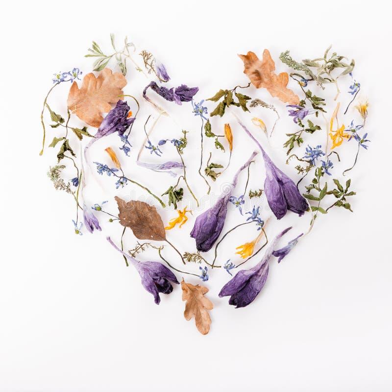 Цветет состав Рамка сделанная из высушенных цветков на белой предпосылке Плоское положение, взгляд сверху стоковые изображения rf