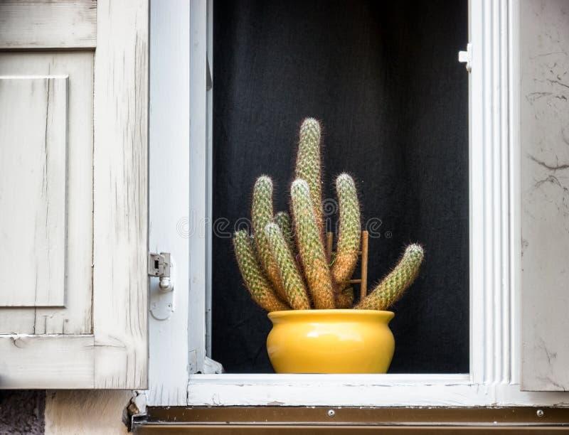 цветет старое окно стоковое фото