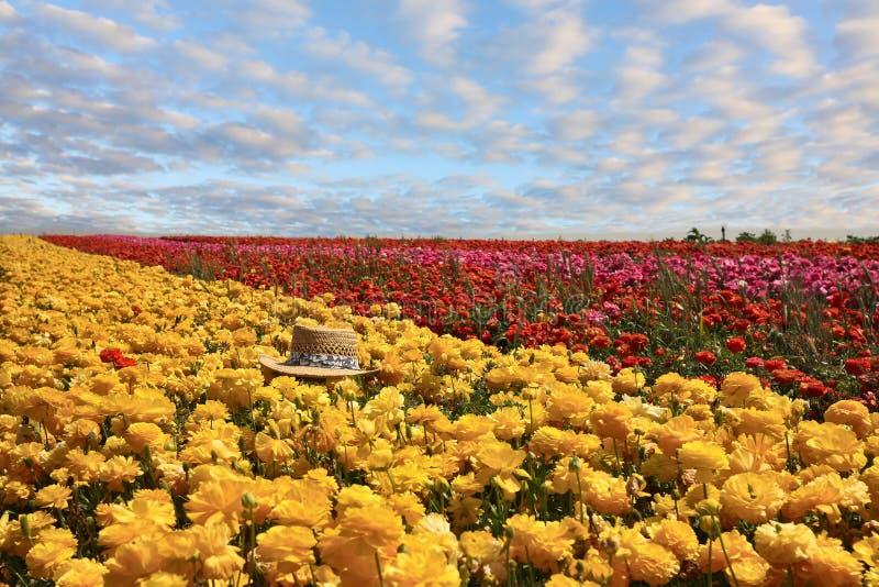цветет сторновка выйденная шлемом стоковое фото rf