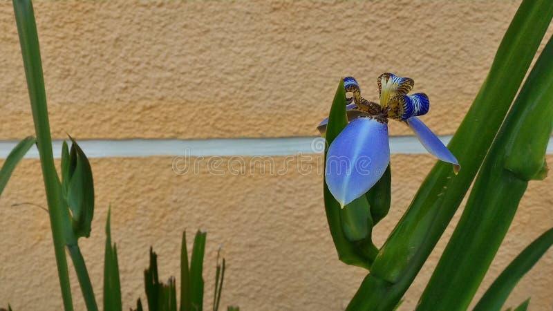 цветет урбанское стоковое фото rf
