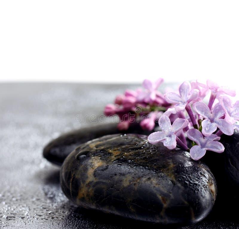 Цветет фиолетовая сирень на камнях курорта в капельках воды стоковое фото rf