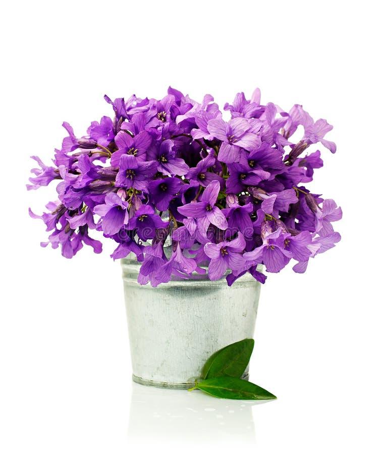 Цветет фиолеты в малом ведре стоковая фотография rf