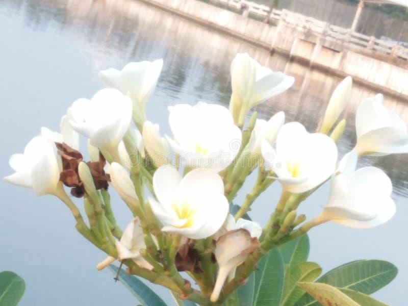 цветет чудесное стоковые фотографии rf