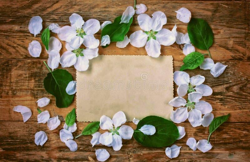 Цветет яблоко, лепестки и бумажная карточка стоковые изображения rf