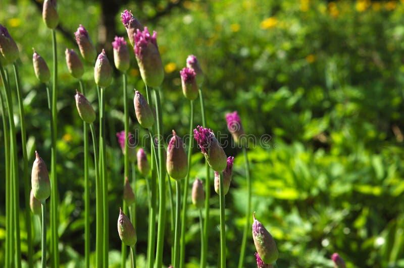 Цветет яркий солнечный летний день. стоковые фото