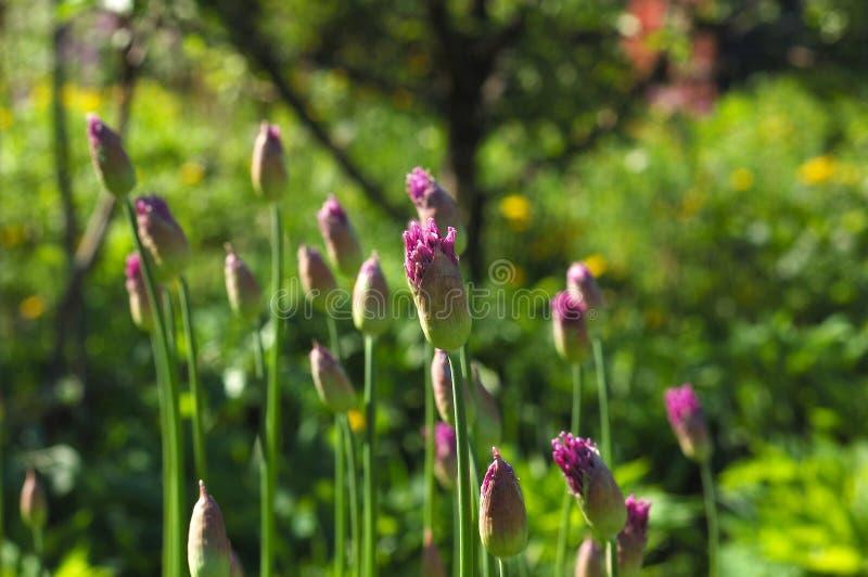 Цветет яркий солнечный летний день. стоковая фотография rf