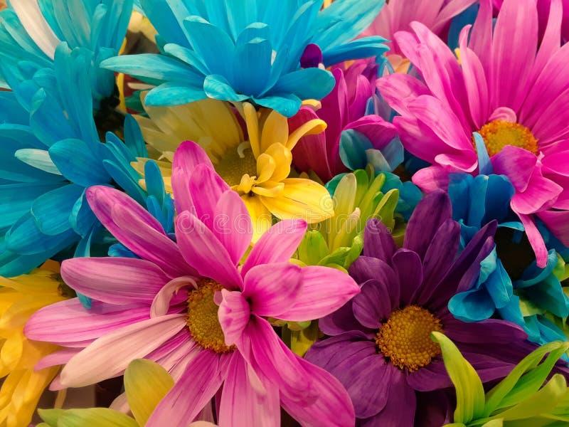 Цветет aint этот цвет стоковые изображения rf