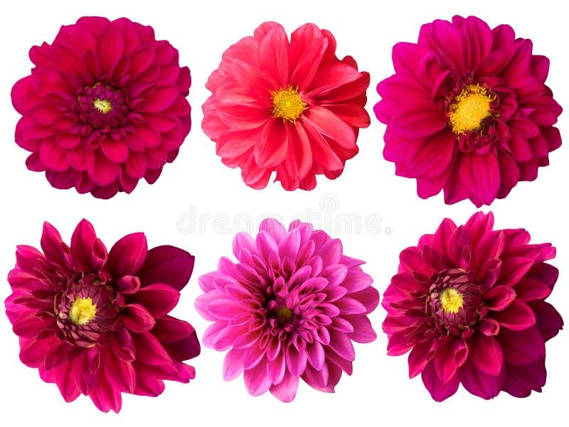 цветет peonies стоковое изображение