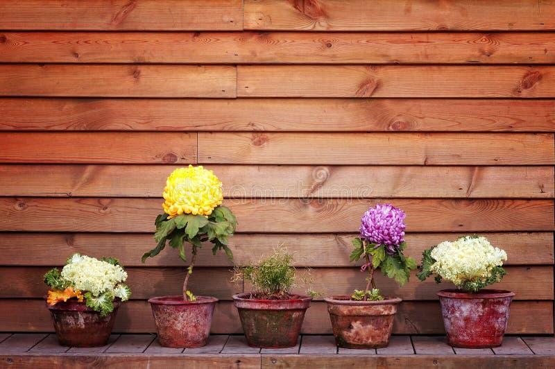 цветет potted стоковое изображение rf