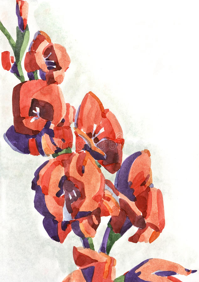 цветет watercolour gladiolus иллюстрация штока