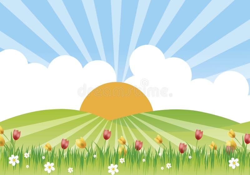 цветистый лужок стоковое изображение rf