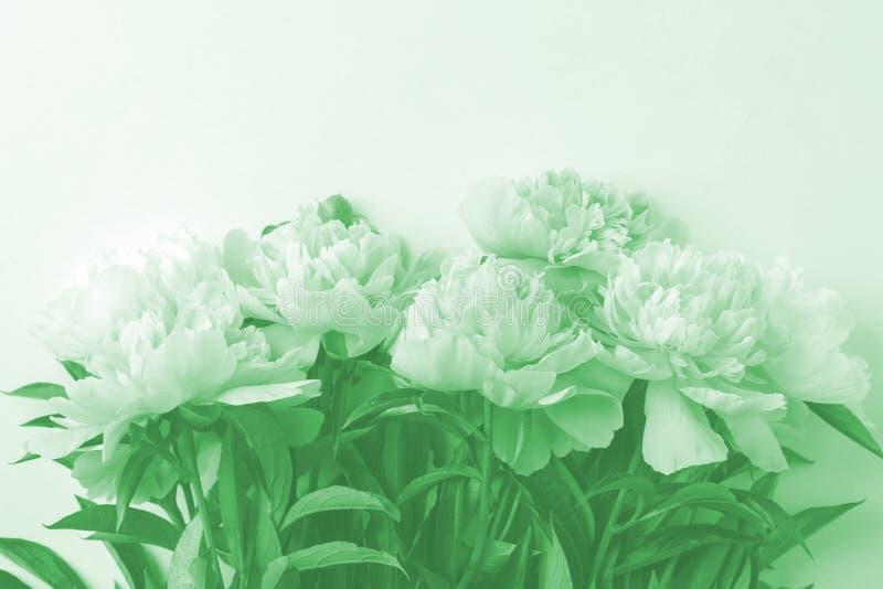 Цветит рамкой в нео-мутном модном пастельном цвете Сезонный праздничный роман, святой валентин, 8 марш торжества, вид с главной к стоковые изображения