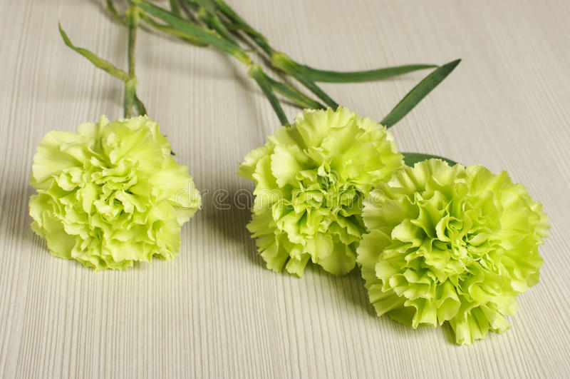 3 цветка гвоздики на поле стоковое изображение rf