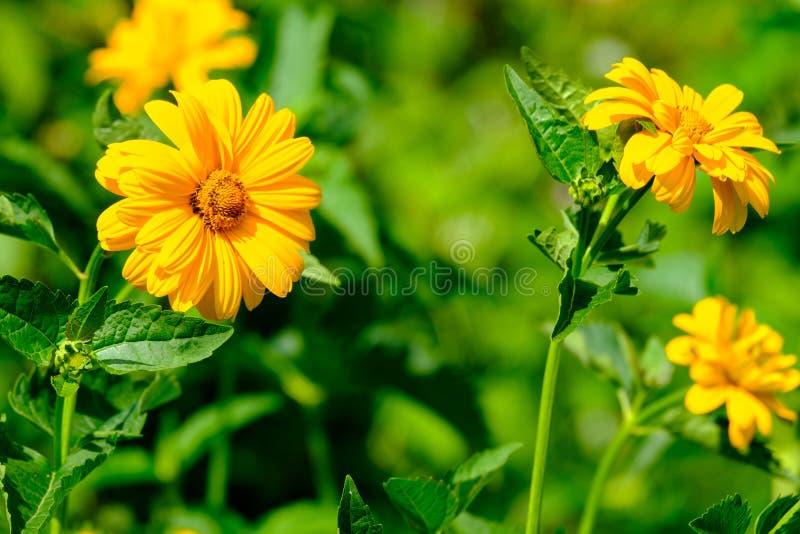4 цветка оранжевого gerbera на предпосылке запачканной растительности, реальные цветки стоковое изображение rf