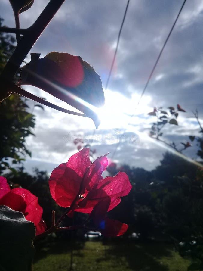 2 цветка стоковое фото