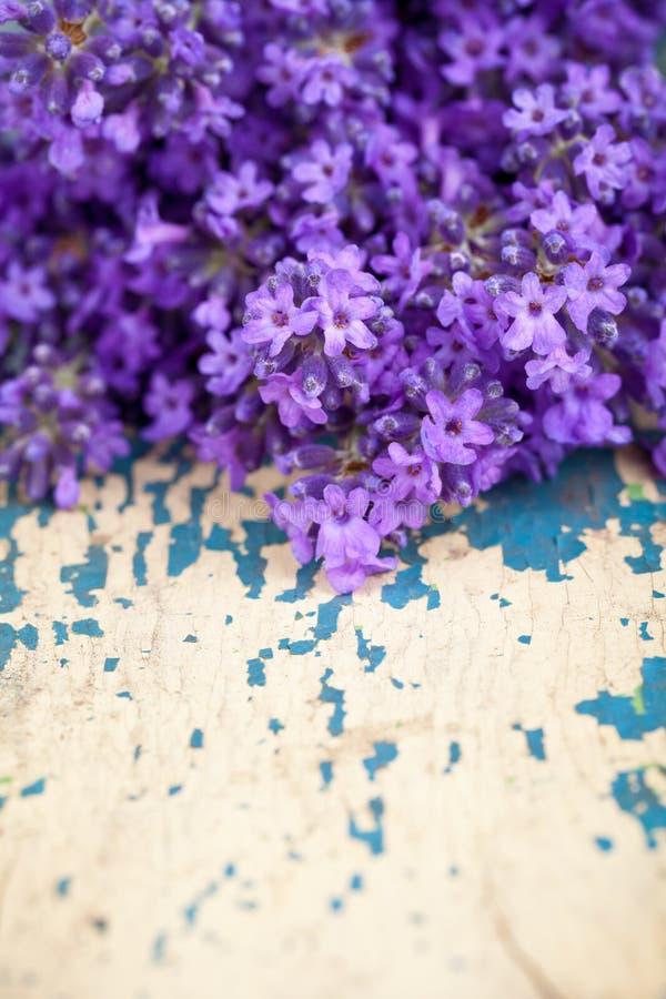Цветки лаванды стоковая фотография