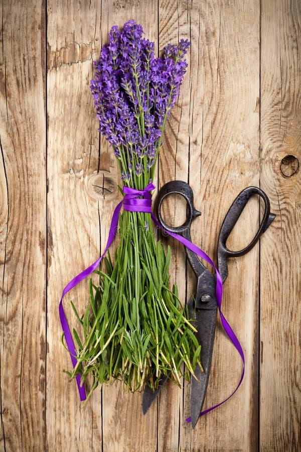 Цветки лаванды стоковое изображение rf