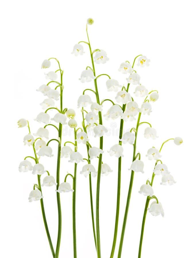Цветки ландыша на белизне Стоковая Фотография RF