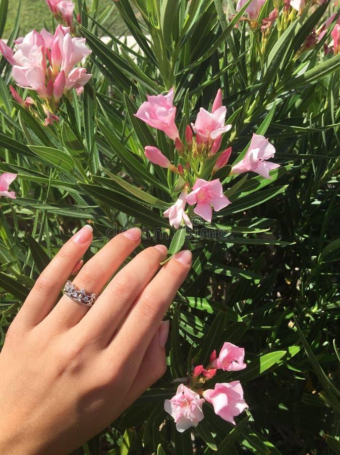 Цветки Аризоны стоковое фото rf