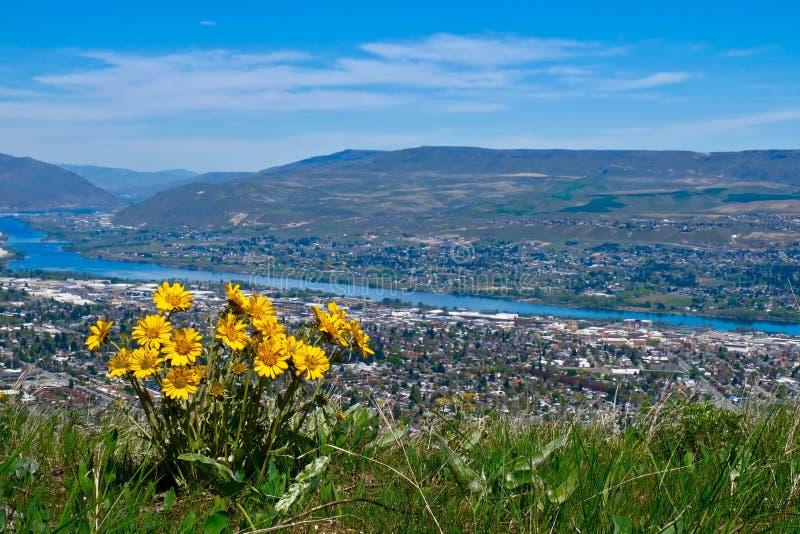 Цветки арники над видом на город стоковое фото