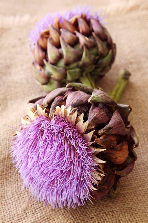 цветки артишока стоковая фотография rf