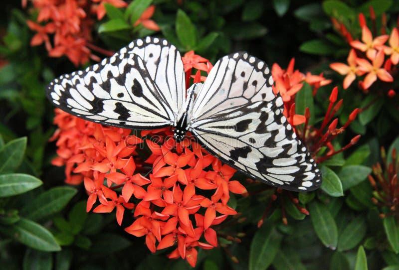 цветки бабочки красные стоковые изображения