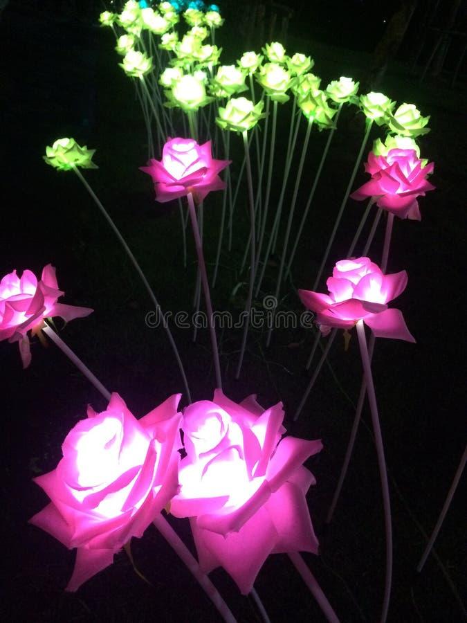 Цветки без света стоковая фотография rf