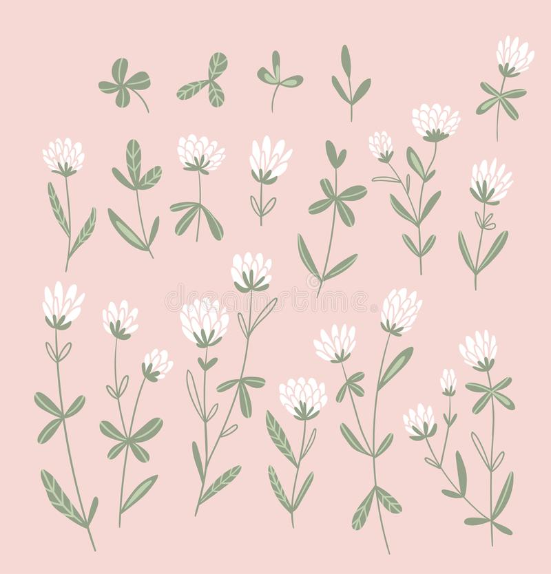 Цветки белого клевера изолированные на розовой предпосылке Набор вектора флористический Милые нарисованные вручную естественные э иллюстрация штока