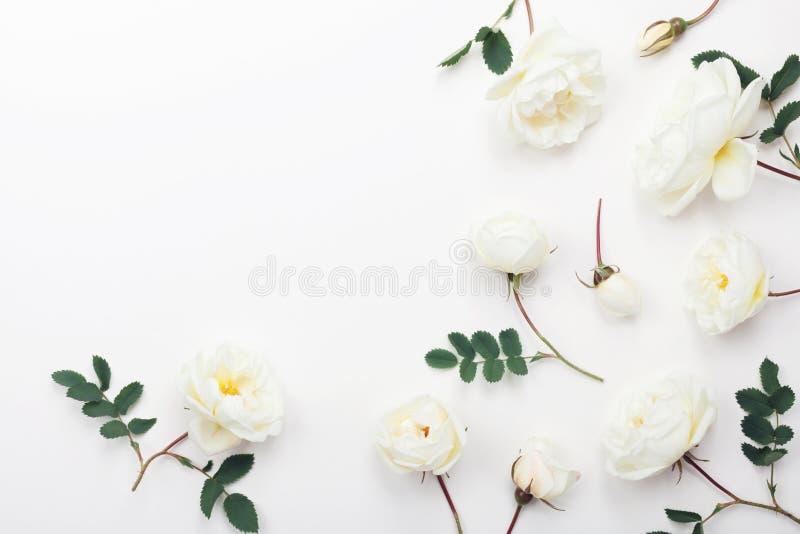 Цветки белой розы и зеленые листья на светлой предпосылке сверху Красивый цветочный узор в плоском положенном дизайне стоковое изображение rf