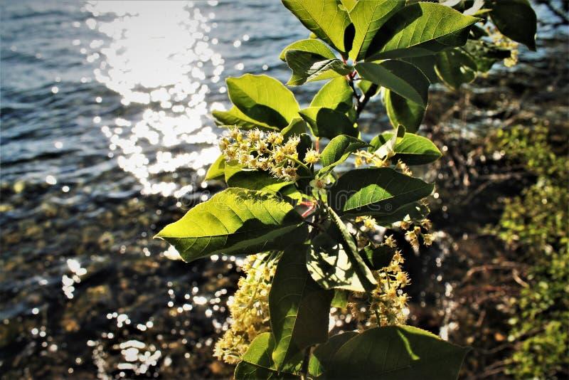 Цветки, берег озера, заход солнца стоковые фотографии rf
