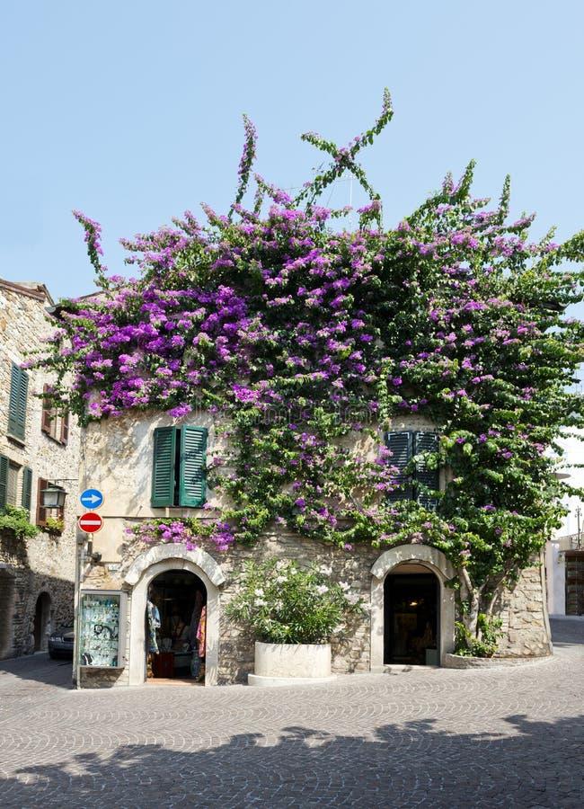 Цветки бугинвилии на городке Sirmione стоковая фотография rf