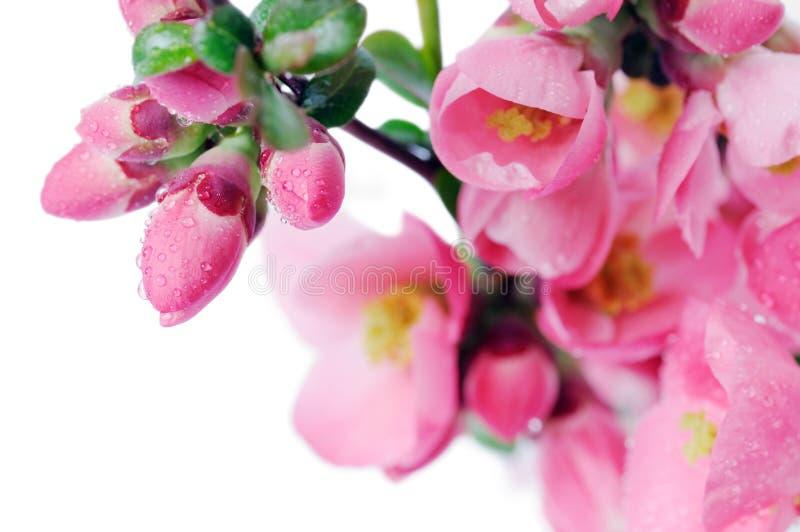 цветки бутонов стоковая фотография