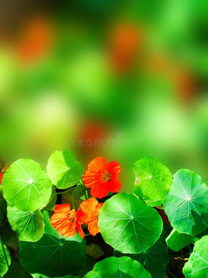 Цветки везде стоковая фотография rf