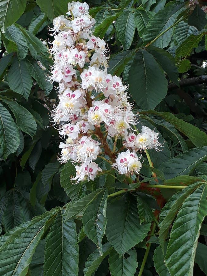 Цветки весной стоковые фотографии rf