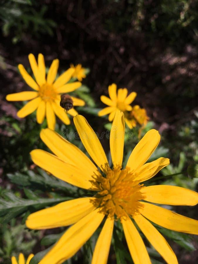Цветки весной стоковые фото