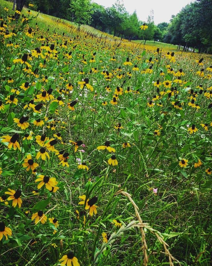 Цветки весной стоковое изображение rf