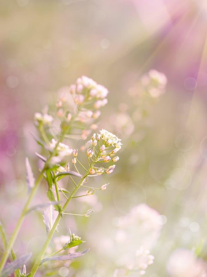 Download Цветки весны белые стоковое фото. изображение насчитывающей lush - 40579128