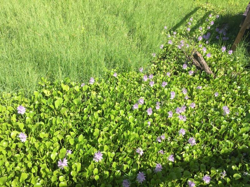 Цветки весны болотистых низменностей стоковая фотография