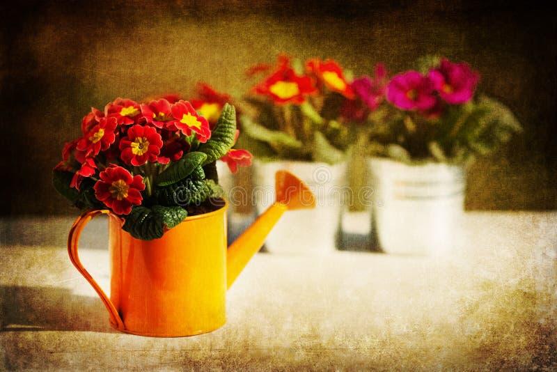 Цветки весны с текстурой grunge стоковая фотография rf