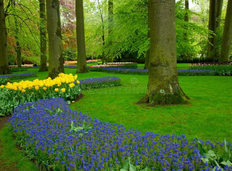 Цветки весны в парке Голландии стоковое фото