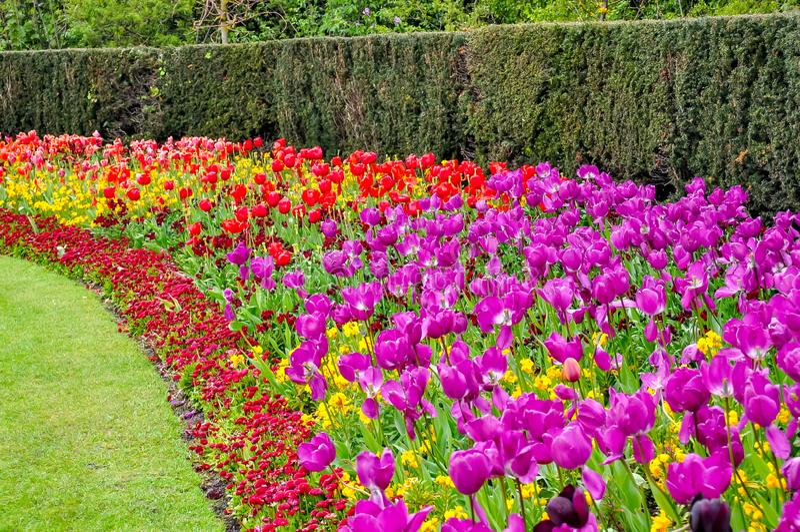 Цветки весны в парке правителя, Лондоне, Великобритании стоковое фото rf