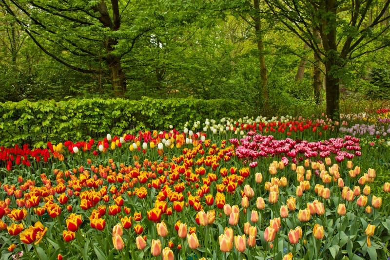 Цветки весны в саде стоковая фотография