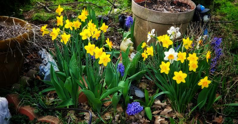 Цветки весны в цветени стоковые фотографии rf