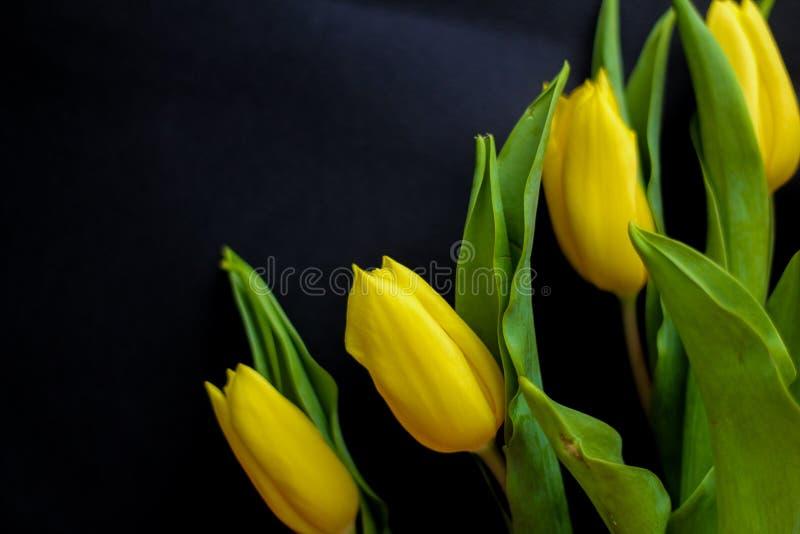 Цветки весны - концепция идеальная для социальных средств массовой информации стоковое фото