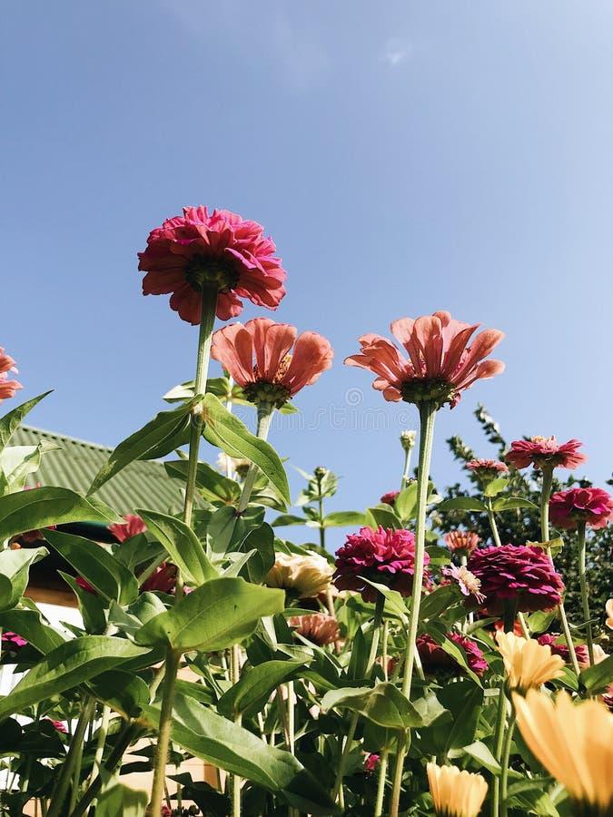 Цветки весны красочные в саде стоковая фотография rf