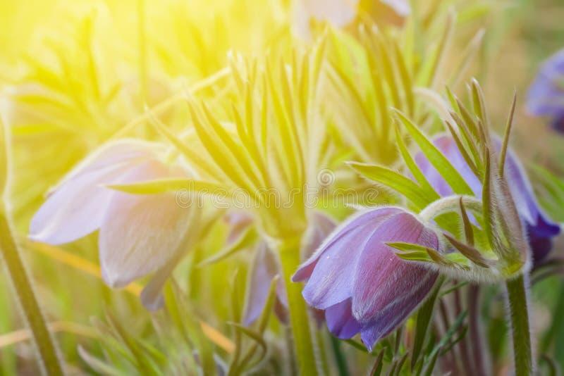 Цветки весны крупного плана голубые стоковое фото rf